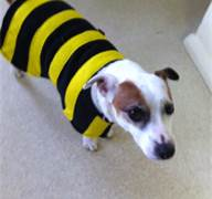 dog as bee