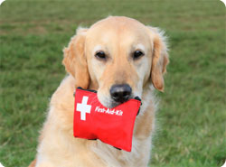 must-pack-pet-first-aid-kit