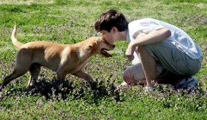 dog kissing young boy